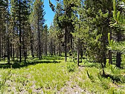 land, for sale, island park, idaho, hoa, fish, recreational, cabin, build, year-round access, hunt, for sale