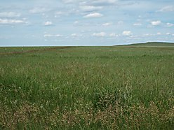 acres, property, for sale, bare, farm land, mountain views, mineral rights, Dupuyer, Montana for sale