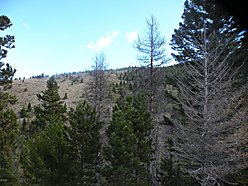 land, for sale, wolf creek, montana, blm, views, hunt, missour river, dearborn river, spring, cabin, for sale
