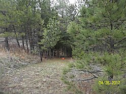 land, for sale, wildlife, hunt, blm, usfs, acres, creek, camp, camper, meadow, deer, mountain lion,  for sale