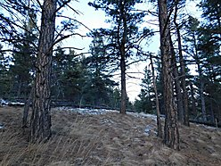 acres, montana, land, for sale, cascade, building site, missouri river, wildlife, year round access, for sale