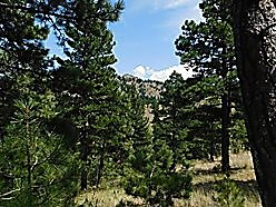 land, for sale, acres, cascade, montana, meadow, wildlife, hike, holter lake, missouri river,  for sale
