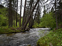 property, boulder creek, acres, trees, forest service, home, philipsburg, montana, missoula, pintlar for sale