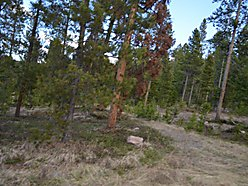 Phillipsburg, Montana, Georgetown Lake, private, lot, acres, seller financing, Flint Creek Valley, for sale
