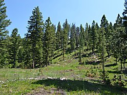 mountain property, for sale, acres, building sites, springs, power, Philipsburg, Montana, Rock Creek for sale