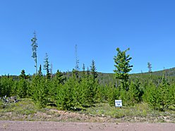 Philipsburg, Montana, acre, marshall ridge subdivision, rock creek, discovery ski, property, power,  for sale