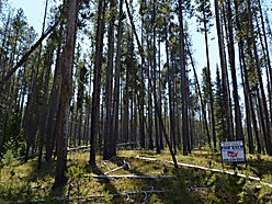 acres, land, for sale, Georgetown Lake Estates, Philipsburg, Montana, property, lot for sale