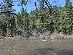 land, for sale, forest service, creek frontage, rock creek, acres, cabin, off grid, fish, hunt,  for sale