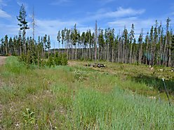 land, for sale, building site, georgetown lake, montana, power, well, discover ski, fish, cabin,  for sale