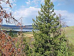 georgetown lake, montana, home, acre, recreational, seller financing, approved credit, lot, for sale