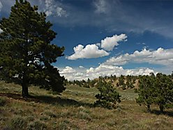 land, for sale, casper, wyoming, pine mountain ranch, power, wildlife, water, views, private,  for sale