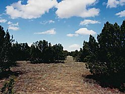 new mexico, canon milagro, land, for sale, acres, alternative energy, route 66, year round access,  for sale