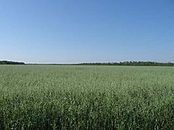 acres, land, baudette, minnesota, leased, farmed, commercial, property, property, lincoln, nebraska, for sale