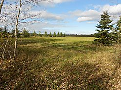 acres, creek frontage, property, zippel creek, wildlife, lake of the woods, state park, resort, for sale