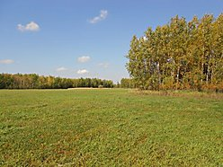 Baudette, Minnesota, building, farming, hunting, land, acres, hay ground, crop acres,