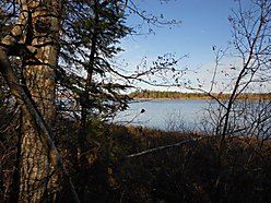 lot, rainy river, river, Baudette, Minnesota, trees, property,  for sale