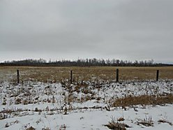 land, warroad, Minnesota, acres, wooded, lake of the woods, cattle, fencing, electricity, well,  for sale