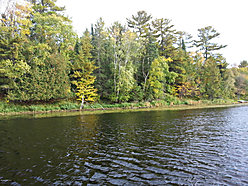 Wabanica Creek,  Waterfront Lot, Baudette, Minnesota, acre, property, land, trees, fishing,  for sale