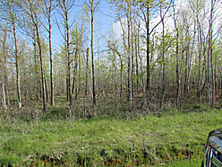 acre, property, tract, lot, for sale, Baudette, Minnesota, Rainy River, Lake of the Woods for sale
