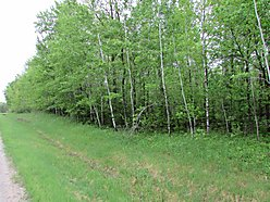 building lot, walleye, lake of the woods, zipple bay state park, baudette, minnesota, for sale, deer for sale