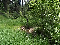 St.Maries, Idaho, acres, timbered, state land, year round creek