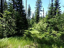 Fernwood, Idaho, acres, treed, building sites, horse back riding, atv riding, peaceful for sale