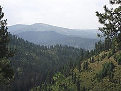 st.maries, idaho, timber co land, building site, perk tested, hunting, wildlife,  for sale