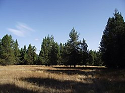 acres, land, building sites, forest, forest service, spring, pond, private, timber, pasture, Emida, Idaho