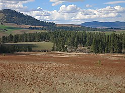 acres, views, easy access, road, farm, Idaho, property, Hwy 95, CRP, Coeur d Alene, Moscow for sale