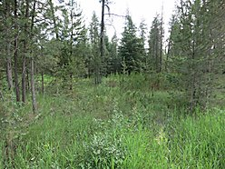acre, land, timbered land, propery, build, for sale, well, natural gas, telephone, electric, Idaho for sale