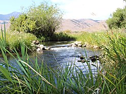 acres, creek, land, for sale, mackay, idaho, swauger slough, views, mobile home, fish, hunt, garage, for sale