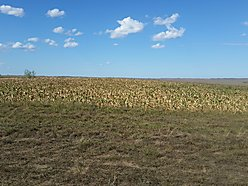 land, for sale, watauga, south dakota, acreage, great plains, National Grasslands, Shadehill, hunt,  for sale