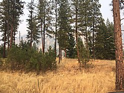 lot, for sale, superior, montana, building lot, clark fork river, lolo hot springs, national forest, for sale