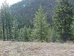 acres, lot, Superior, Montana, wildlife, deer, elk, view, septic, well, mountain, moose, turkey,  for sale