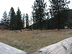 building lot, for sale, superior, montana, riverfront, wildlife, clark fork river, hunt, fish,  for sale