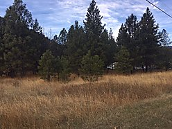 acres, building lot, for sale, superior, montana, home, quinn's hot springs, clark fork river,  for sale