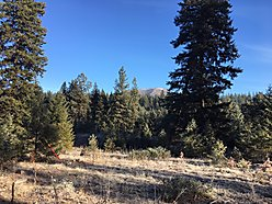 lots, land, for sale, Superior, Montana, State land, Clark Fork River, views, power, acres, build,  for sale