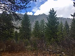 land, for sale, superior, montana, wildlife, usfs land, dry creek, lolo national forest, fish, hunt, for sale