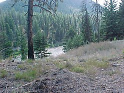 river lot, property, acre, Superior, Missoula, Montana, fir, pine, river, building lot, shared well for sale
