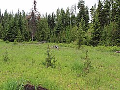 land, for sale, superior, montana, rv, atv, clark fork river, pardee creek, year round access, acre, for sale