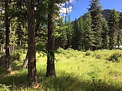 lot, for sale, acre, superior, montana, wildlife, views, clark fork river, building lot, covenant,  for sale