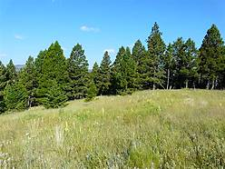 acres, for sale, blm land, building site, wooded property, property, views, hunting, wildlife, deer, elk, moose, bear, helena, boulder montana, county fair, hot springs,  for sale