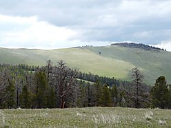 Helena, Montana, land, property , spring, for sale, cabin site, building, acres