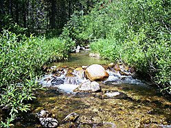property, home, cabin, creek, acres, national forest, deerlodge, bitterroot, lolo, hunting, fishing, big hold, clark fork, rivers, georgetown lake, ski area, hot springs, anaconda, for sale