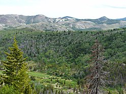 acres, anaconda, montana, for sale, spring creek, national forest, lolo national forest, hunt, fish, for sale