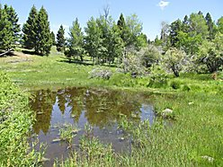 land, for sale, montana, pond, creek, wildlife, forest service land, hunt, spring, power, cabin,  for sale