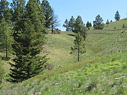 land, for sale, acre, wolf creek, montana, wildlife, cascade, blm land, state land, dearborn river, for sale