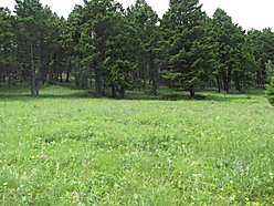 acres, for sale, home, montana, private, elk, deer, land, cabin, blm land, helena, power, off grid,  for sale