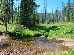 cabin, land, for sale, national forest, helena, montana, hensley creek, wildlife, views, fish, hunt, for sale