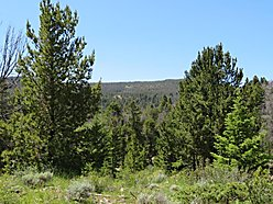 land, for sale, cabin, big hole river, national forest, hunt, fish, acres, wise river, montana, elk, for sale